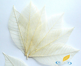 Каучук белый (10 шт. большой)